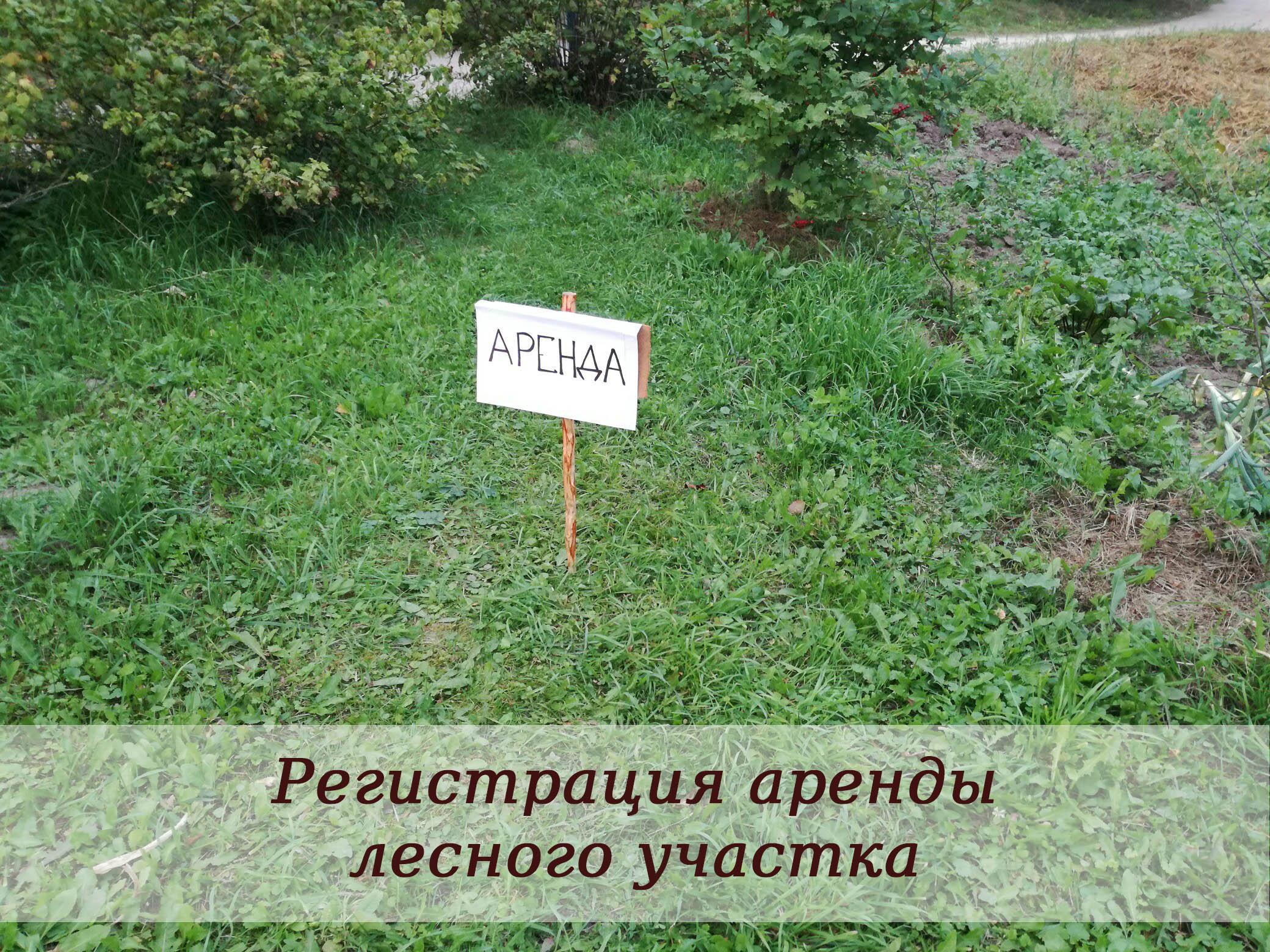 Регистрация аренды лесного участка